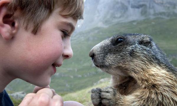 不知道是不是每個人都會有這樣的心情,只要接近動物就會有一種自然而然打從心底出現的愉快,那是因為動物是大自然界的小精靈,充滿高振頻的好能量,也因為這樣小動物變成了療育系的陪伴。 我們生活在都市叢林太久,幾年一次的動物園之旅才能一次看遍多種動物,但往往看著他們被圈養在一個小小的空間難免心有不捨。野生動物與人類長期處於不同的環境,總會保持著動物的警覺性,以高山土撥鼠為例,只要陌生人類接近,就會緊豎起尾巴以及咬牙切齒的表情來表現敵意,甚至試圖發出聲響來警告同伴。 孩子也跟小動物一樣帶著純真無心機的能量,八歲小男孩