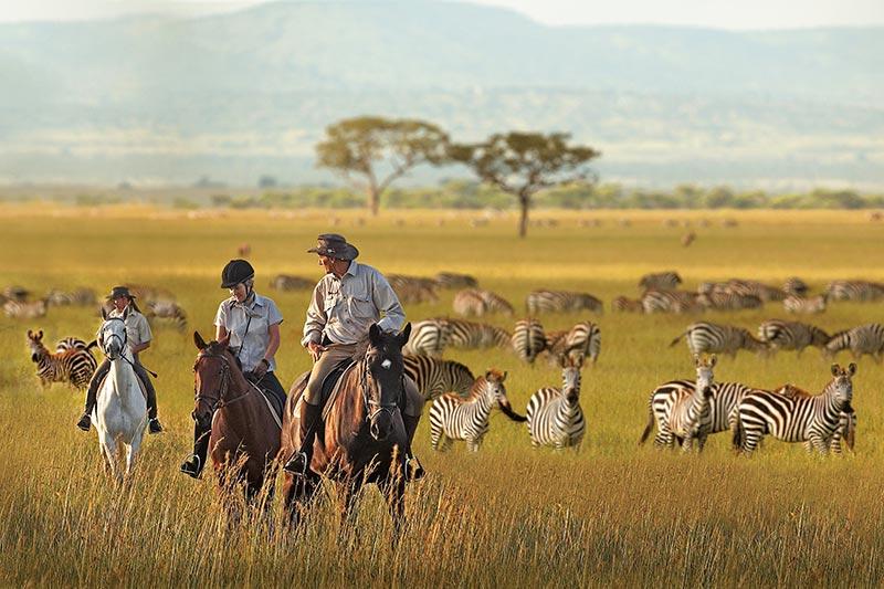 野生動物就在眼前!前進非洲薩伐旅Micato Safaris - La Vie行動家 設計改變世界