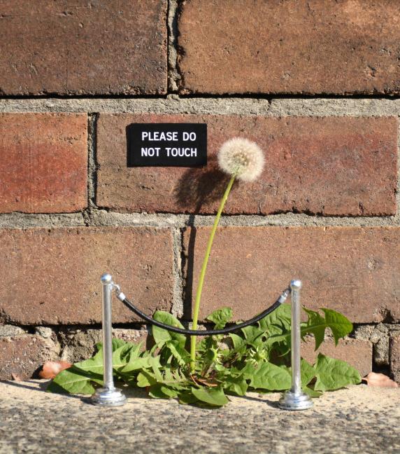 幽默逗趣的街頭告示牌就是要吸引你的目光-Michael Pederson