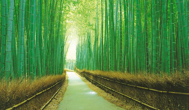 明天就出發:京都府-令人忍不住也跟著立正站好的嵯峨野竹林