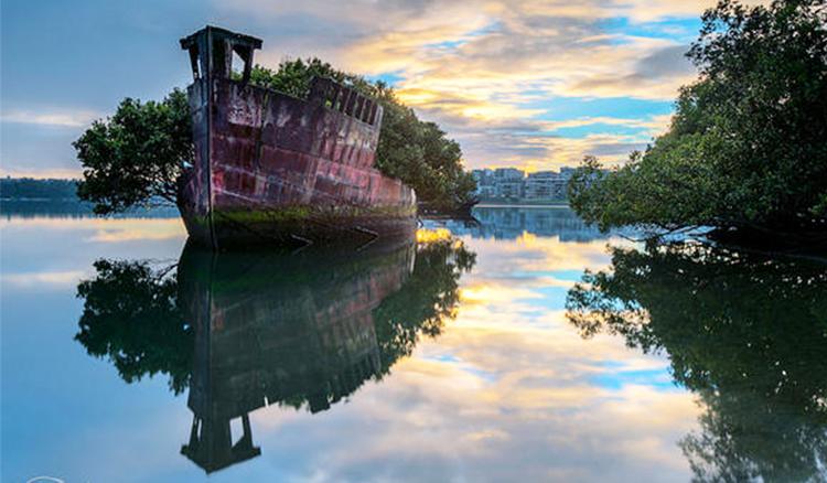 雪梨驚現漂浮森林!102年棄船成為水上樹林孕育地 - La Vie行動家 設計改變世界