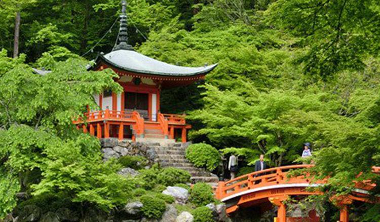 櫻花祭結束後就是它了啦!京都的初夏「青楓」私房4選 - La Vie行動家 設計改變世界