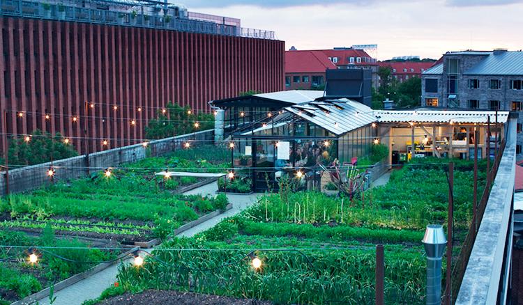 抬頭望見天台農家-哥本哈根Stedsans打造屋頂農場+有機餐廳