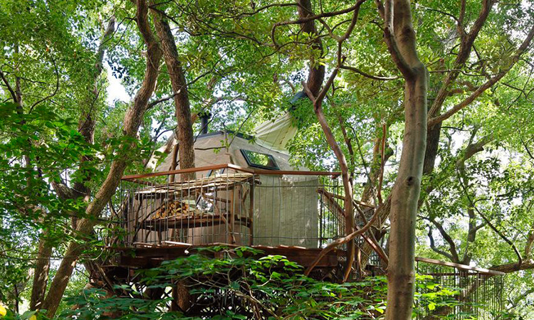 在老樹上享用一杯午茶:建築師中村拓志打造的茶室樹屋 - La Vie行動家 設計改變世界