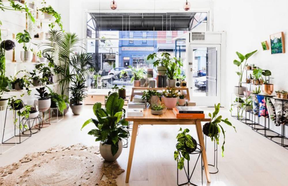墨爾本植物小藝廊:IVY MUSE BOTANICAL EMPORIUM 生活選物店 - La Vie行動家 設計改變世界