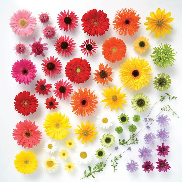 色彩排列的繽紛美學!美國藝術家Julie Seabrook Ream推「彩虹百科全書」 - La Vie行動家 設計改變世界