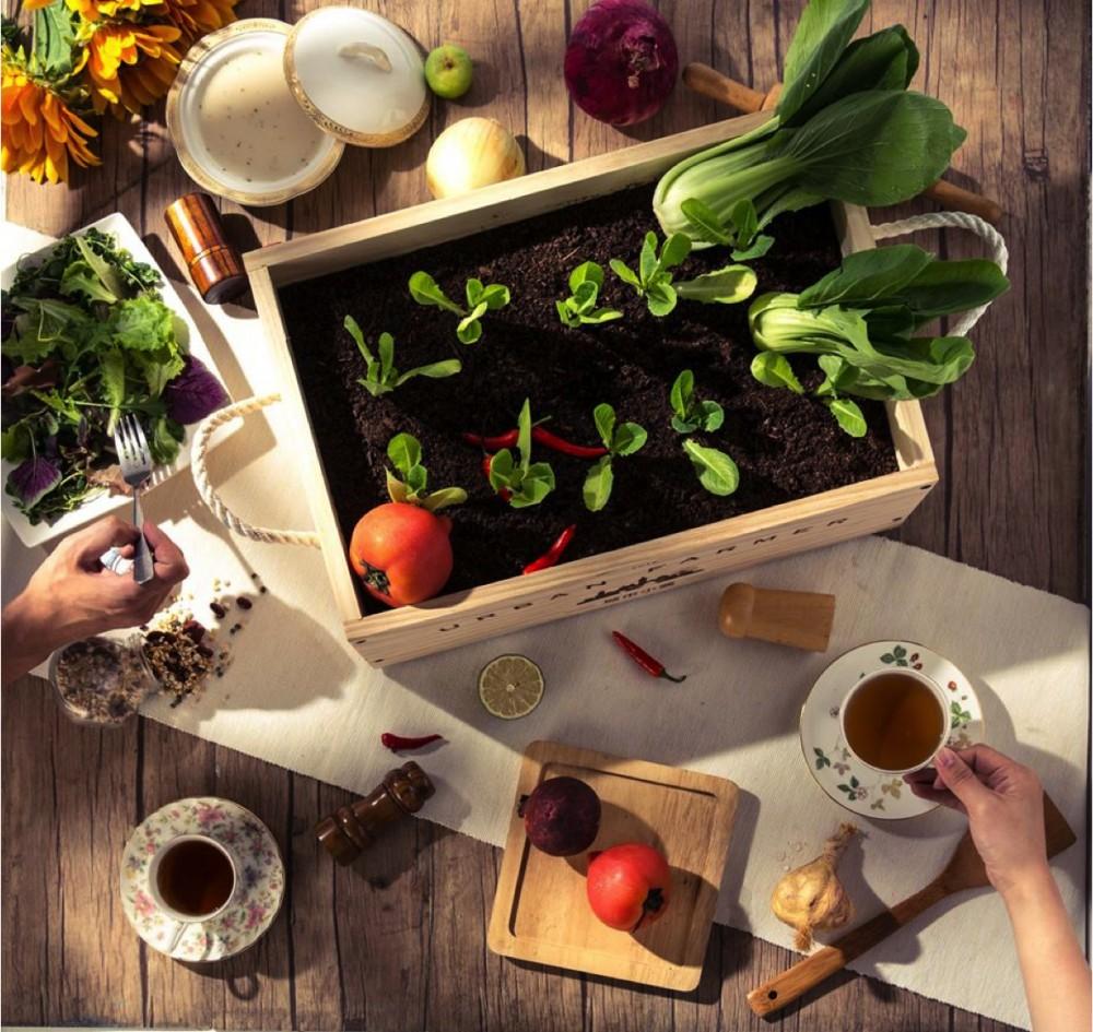 當個城市農夫!跟著食栽品牌「Urban Farmer城市小農」打造自己的療癒系小農田